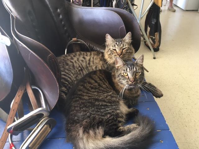 TH Barn Cats Bonnie & Clyde
