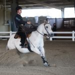Compete in Our Equine Program