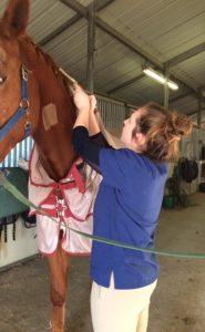 Pre Veterinary Interns at Work