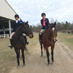School Horses Glenn & Beckett